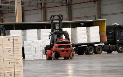 Celulose já responde por 60% das exportações de industrializados de MS,