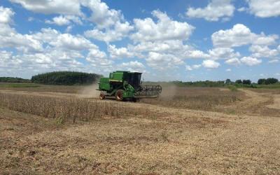 IFMS leiloa 12 toneladas de soja em Ponta Porã