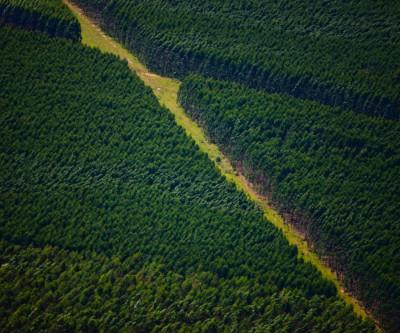 Em MS, Suzano abre processos seletivos com vagas para Água Clara, Brasilândia e Três Lagoas