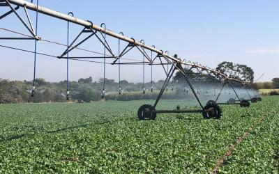 O caminho para a agricultura irrigada de alta eficiência em Mato Grosso do Sul