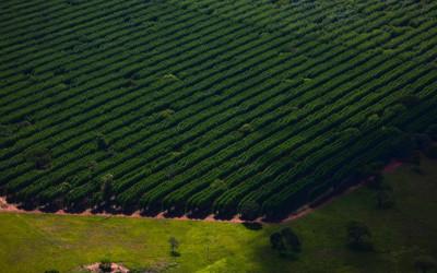 Suzano abre processos seletivos com 3 vagas para Ribas do Rio Pardo e Três Lagoas (MS)