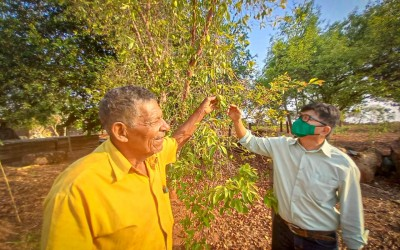 Com mais de 800 mudas de árvores e plantas doadas, Meio Ambiente encerra Semana da Árvore valorizando frutas nativas do cerrado