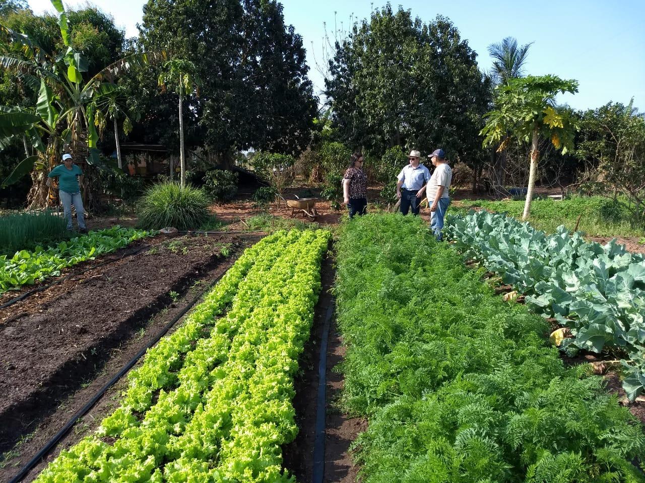 Crescente demanda de alimentos faz com que Departamento de Agronegócio amplie cadastro de pequenos produtores rurais